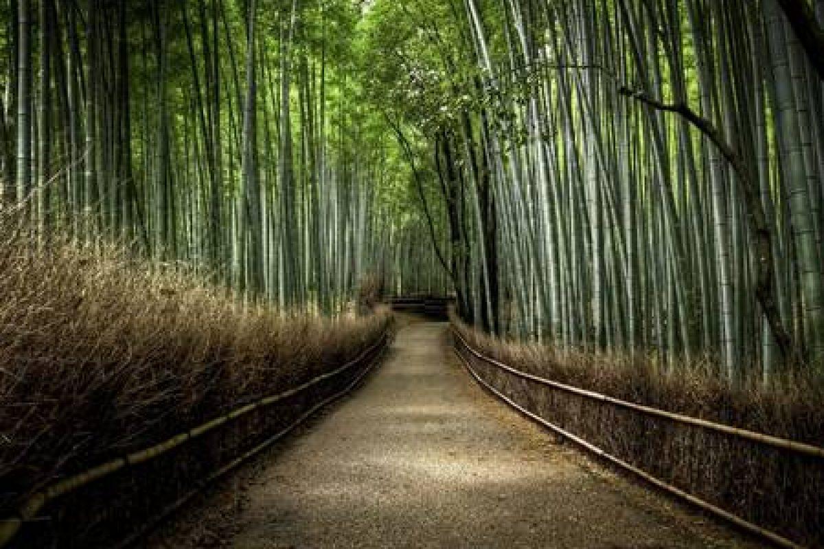 Floresta-de-Bambu-japonês-2